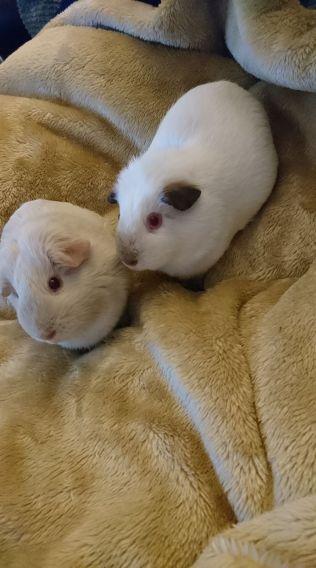 Maisy and Daisy